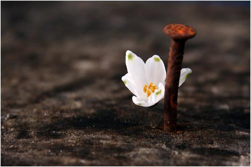 flower n nail