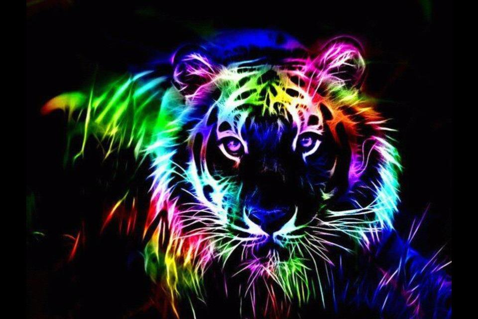 Colorful Tiger,Colorful ,Tiger,eye of a tiger
