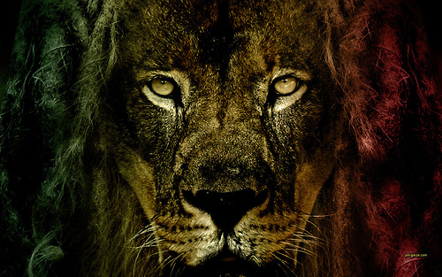 Lion Eyes,Lion ,Eyes