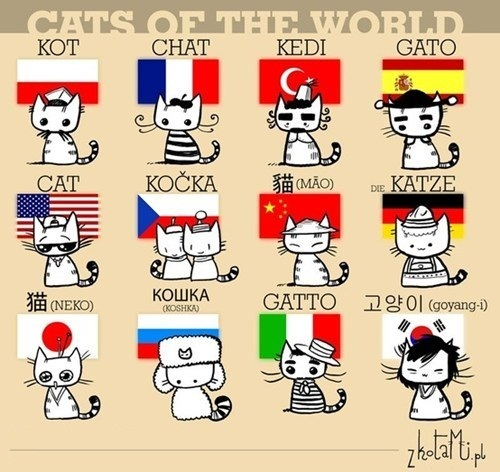 Cats Of The World,Cats, Of The World,grumpy cat,cat,funny,different languages