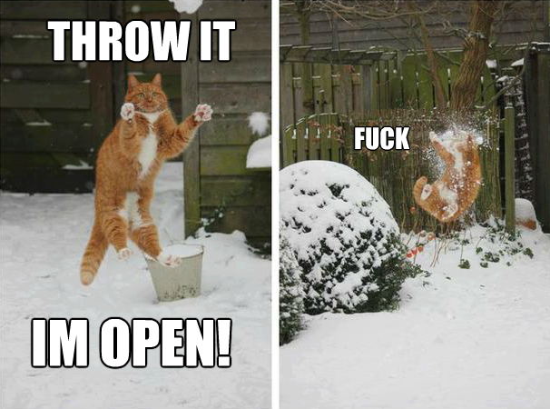 Cat Meme,Cat ,Meme,Funny,I am open,Snow day,snow,